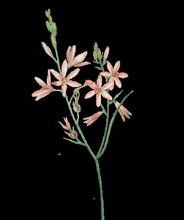 black-flower-alt